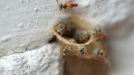 bee work 02 video