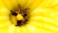 Bee Working video