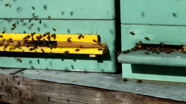 Beehive + Audio video