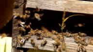 beehive video