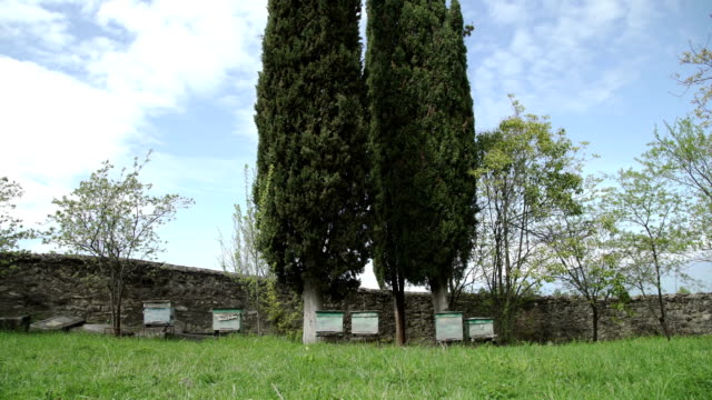 Beehives in a meadow in monastery video