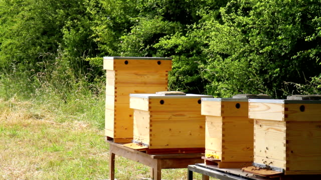 Beehives in a meadow. video