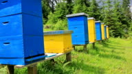 Beehives in a meadow video