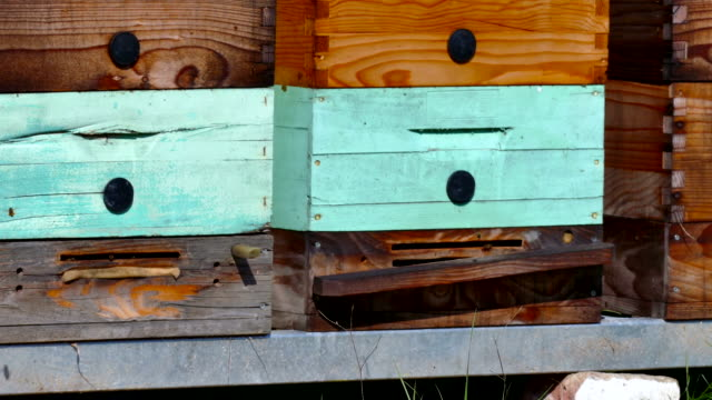 Beehives with honeycomb frames video