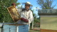Beekeeper and bees in the hive video
