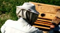 Beekeeper At Work video