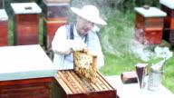 Beekeeper Checking Bee Hive video