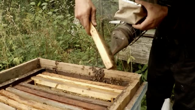 Beekeeper Cleans With Brush And Bee Smoker Bees From Hive video