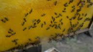 Beekeeper controlling beeyard and bees video