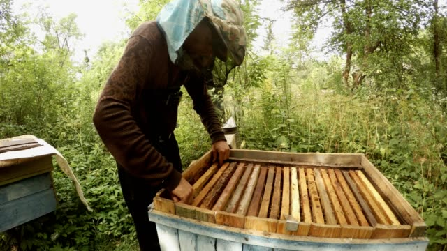 Beekeeper Examines Frame For Honeycoms by Turns in Forest video
