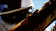 Beekeeper examining hive frame video