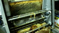 Beekeeper extracting honey with machine in home video