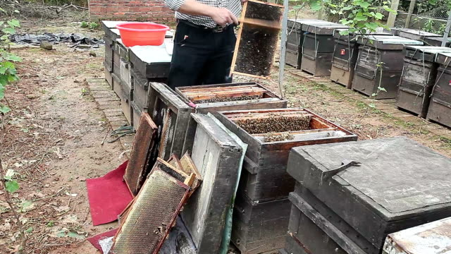 Beekeeper getting honey from the bee box video