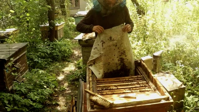 Beekeeper Holds Material From Hive Full of Bees Bee Smoker Fumes Apiary in Forest video