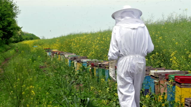 beekeeper inspecting his beehives video