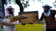 A beekeeper inspects a hive of bees. video