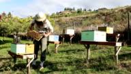 Beekeeper Okanagan Valley video