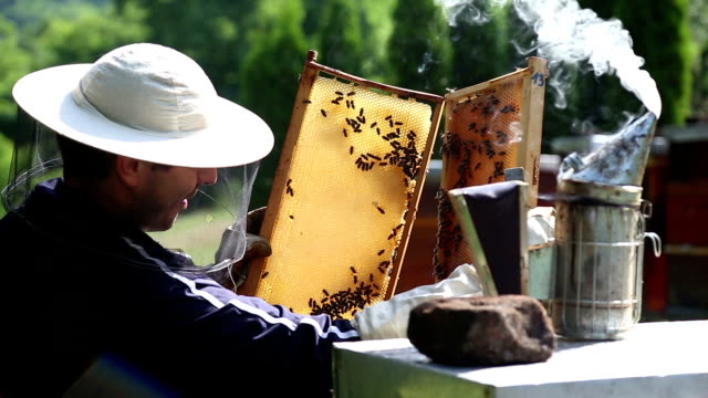 Beekeeper on apiary video