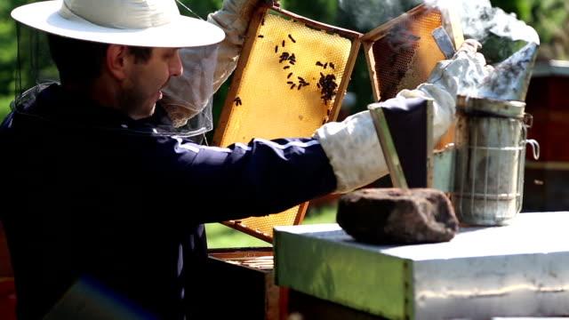 Beekeeper on apiary video