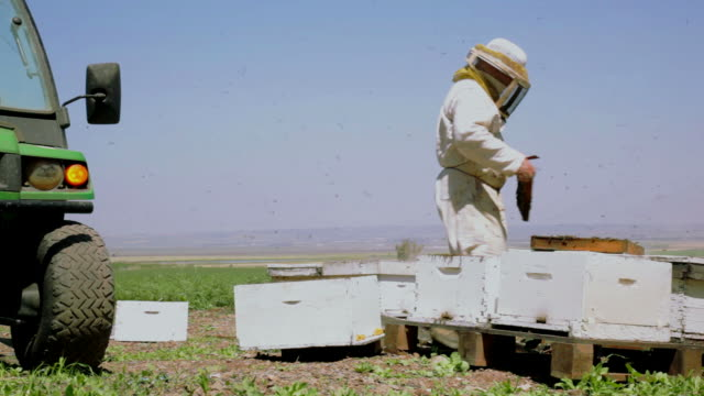 Beekeeper puts a frame with honeycomb into the hive video