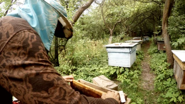 Beekeeper without Gloves Takes Frame for Honeycombs and Knocks Bees video