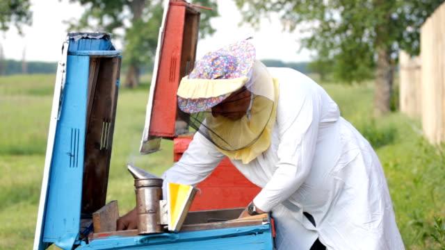 Beekeeper  working in apiary video