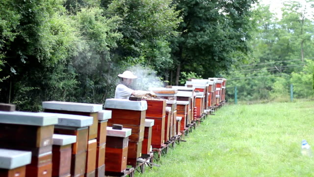 Beekeeper works at his apiary video