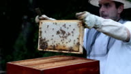 Beekeeping as a way of life video
