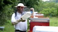 Beekeeping business,man feeding bees video