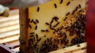 Beekeeping video