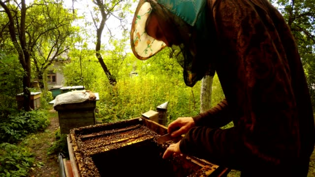Beemaster in Mask Works with Bees Near Opened Hive Apiary in Forest video