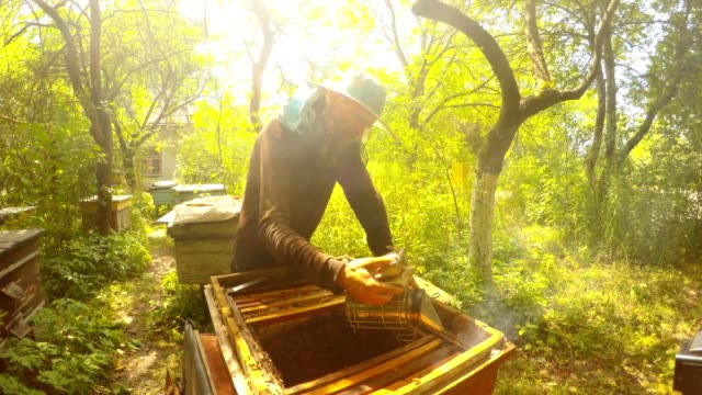 Beemaster in Protective Mask Fills With Smoke Opened Hive video