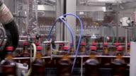 Beer bottles on conveyer belt in factory being filled video