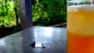 Beer pouring from bottle into the glass video