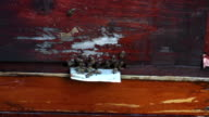 bees against flies . Fight video