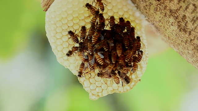 bees and hives video