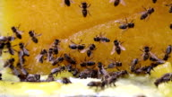 Bees and honey video
