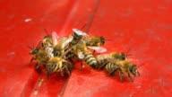 Bees at beeyard video