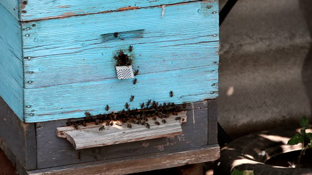 Bees during hard job video