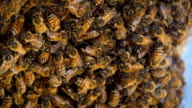 Bees Hive Slow Motion video