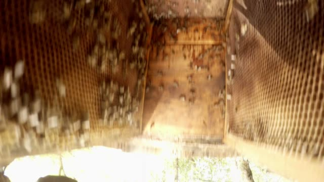 Bees in Hive Top View Camera is Inverted Hiver Works video
