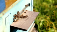 bees in the apiary video