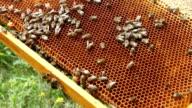 Bees making honey video