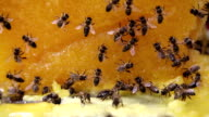 Bees on big piece of yellow flower honey video