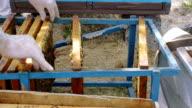 Bees on frame in honeycomb. Honey harvest. video