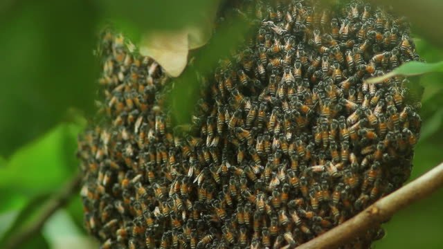 Bees on honeycomb video
