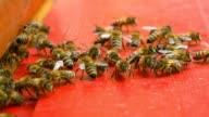 Bees sitting at beeyard video