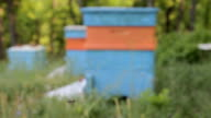 Bees Swarming in Front of Apiary Nature Background HD video