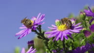 SLOW MOTION: Bees video