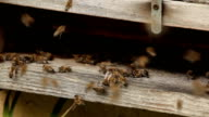 bees video